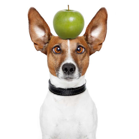 dog with an apple on top photo