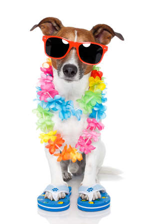 flop: tourist dog with hawaiian  lei