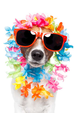 dog with hawaiian  lei  Stock Photo