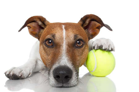 tennis: chien gagnant Banque d'images