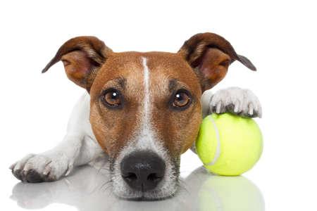 tenis: ganador del perro Foto de archivo