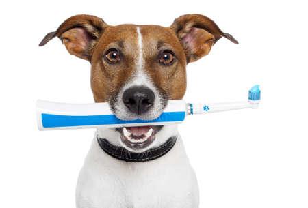 犬歯: 歯ブラシと犬 写真素材