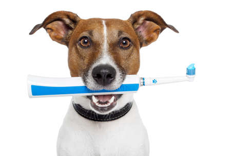 caries dental: perro con cepillo de dientes