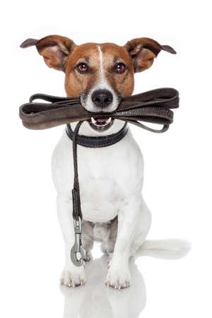 dog on leash: perro con una correa de cuero