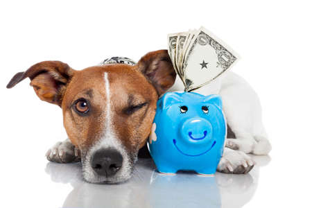dog with piggy bank photo