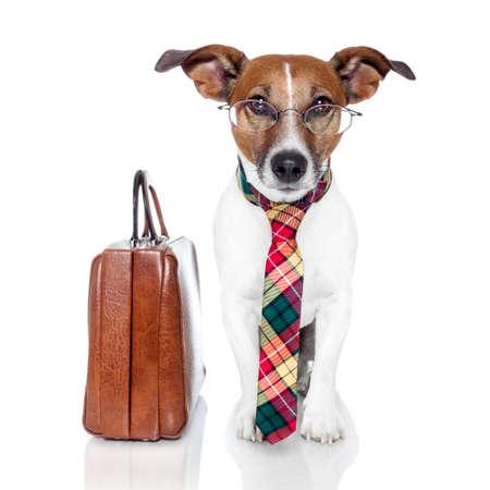 leren tas: hond met leren tas Stockfoto