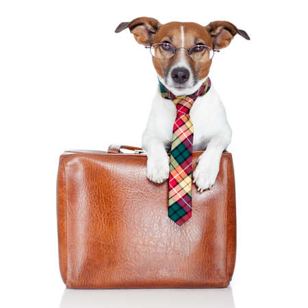 dog with leather bag photo