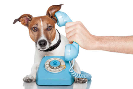 dog on the phone Stock Photo - 13620705