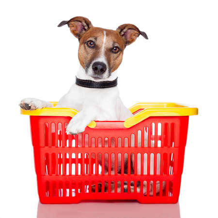 dog in basket photo