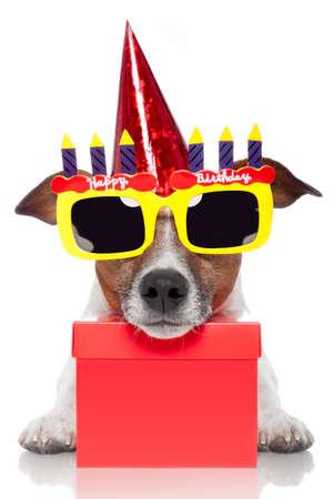 pies urodziny
