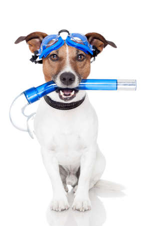 dog with snorkel photo