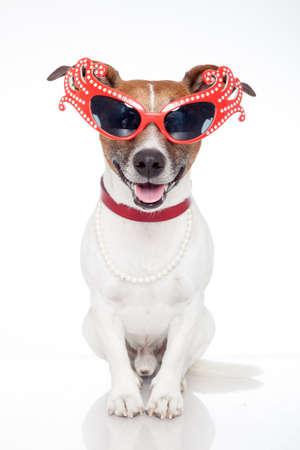 dog as drag queen Stock Photo - 13914160