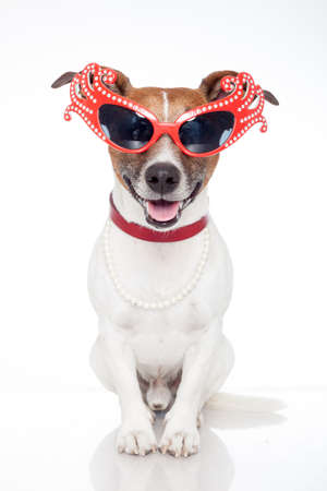 drag queen: dog as drag queen