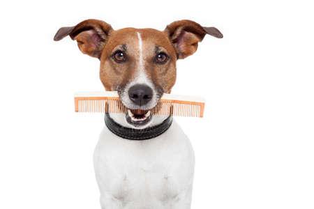 peine: perro con un peine