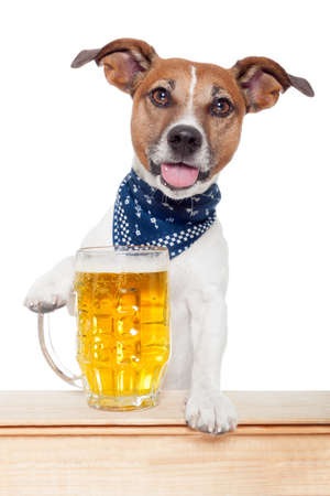 sediento: perro borracho con la cerveza Foto de archivo