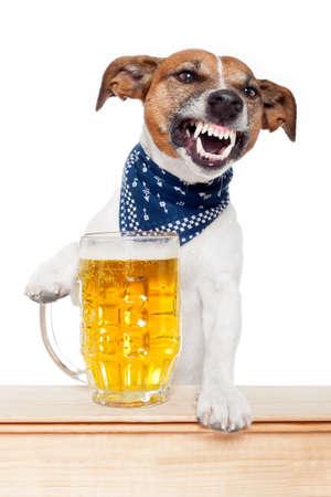 perro furioso: perro borracho con la cerveza Foto de archivo