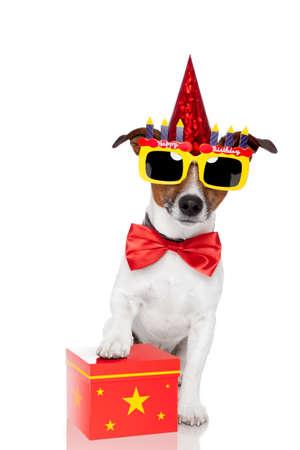 birthday dog  photo