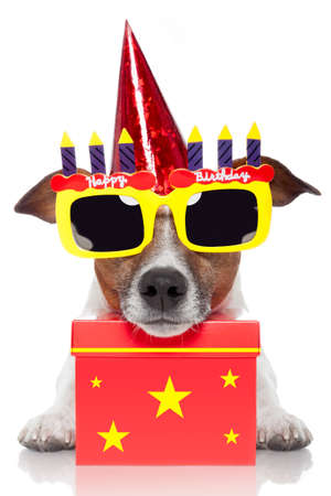 Geburtstag Hund Standard-Bild
