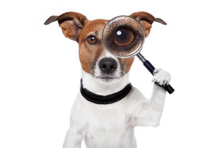 hond met vergrootglas en zoeken Stockfoto