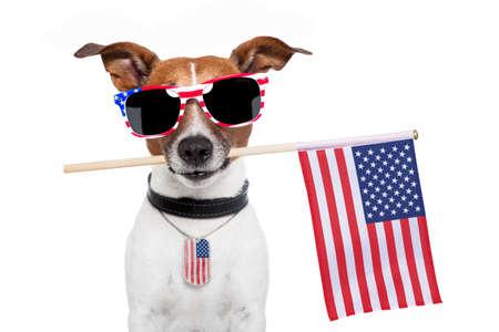 juli: Amerikaanse hond met usa vlag en tinten Stockfoto