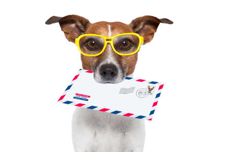send mail: dog with glasses delivering air mail envelope with stamp Stock Photo
