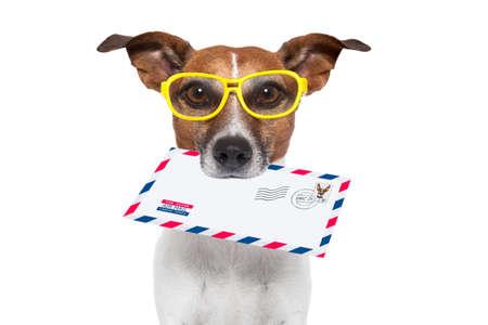 perros graciosos: perro con gafas de entrega de sobres de correo a�reo con el sello de