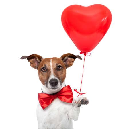 parejas felices: perro en el amor con un globo de coraz�n rojo Foto de archivo