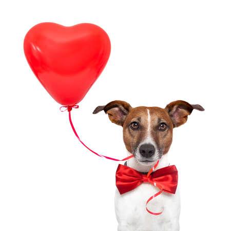 perro en el amor con un globo de corazón rojo Foto de archivo