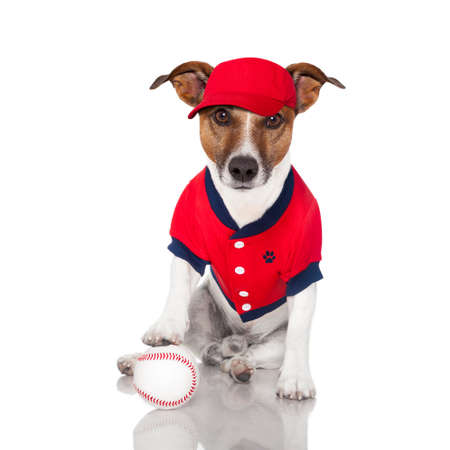 baseball dog with a baseball and a red cap