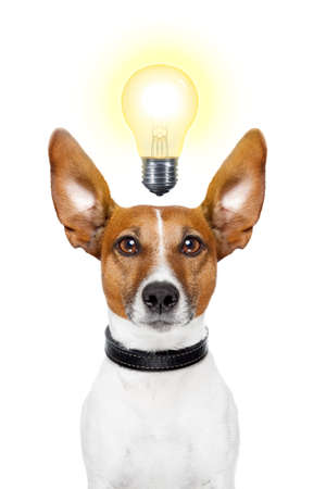 bright idea: Dog having  great ideas showing a glowing lightbulb Stock Photo