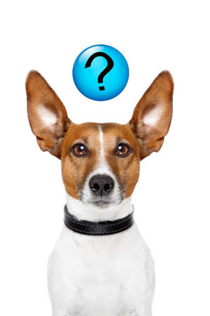 query: Dog asking  with a question mark on top