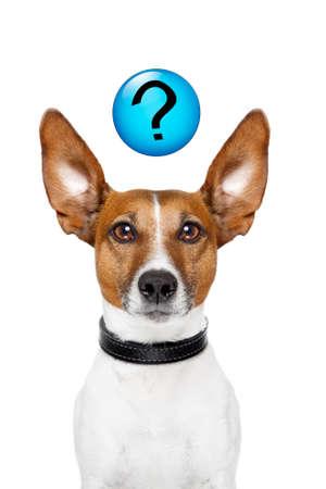 preguntando: Perro pidiendo con un signo de interrogación en la parte superior