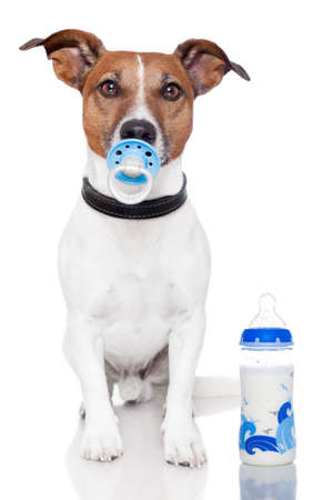 soother: dog as baby with milk bottle and pacifier Stock Photo