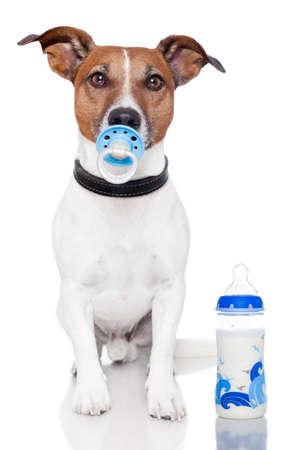plastico pet: perro como bebé con mamadera y el chupete