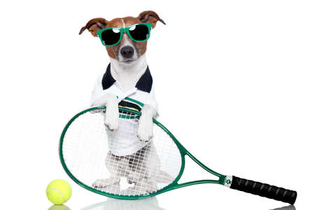 tennis dog with racket and glasses photo