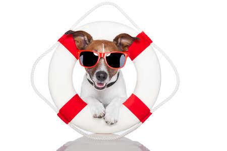 lifebuoy: dog with red and white lifesaver and a hat