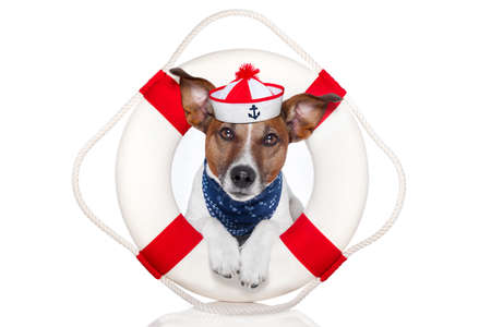 dog with red and white lifesaver and a hat