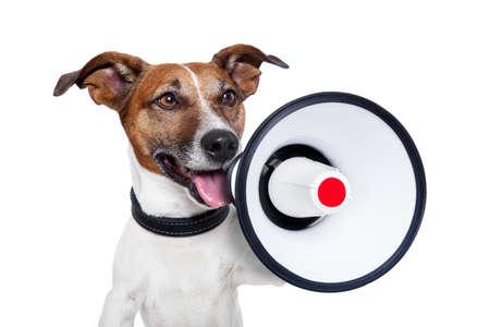 bullhorn: dog shouting into a white and red megaphone Stock Photo