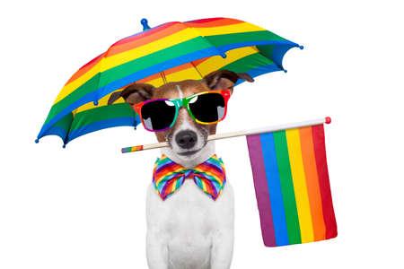 gay dog wearing rainbow glasses Stock Photo - 14247796