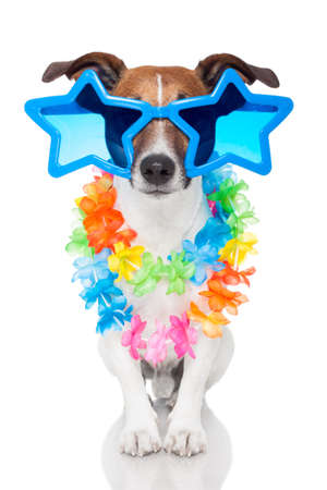 Homosexuell Hund mit Brille Standard-Bild