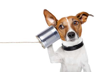 comunicarse: perro en el teléfono con una lata Foto de archivo