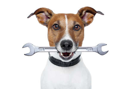 pet services: craftsman dog with a wrench