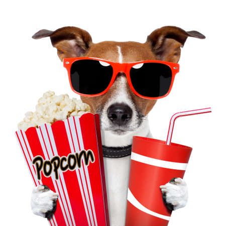 dog watching a movie with popcorn and coke photo