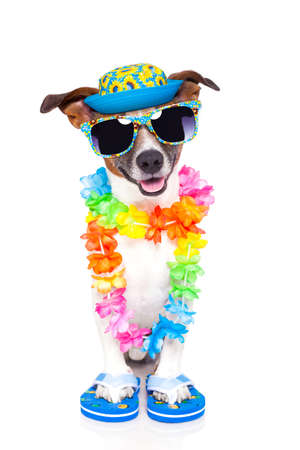 dog on vacation with hawaiian lei photo