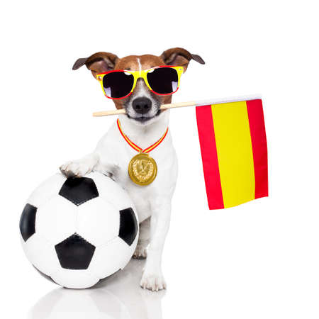 champion: dog as soccer with medal and  flag Stock Photo
