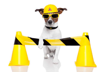 construction helmet: dog under construction with a helmet Stock Photo