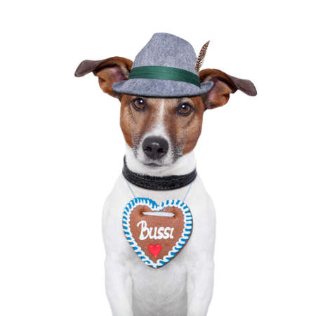 bavarian dog with gingerbread heart Stock Photo - 14469349