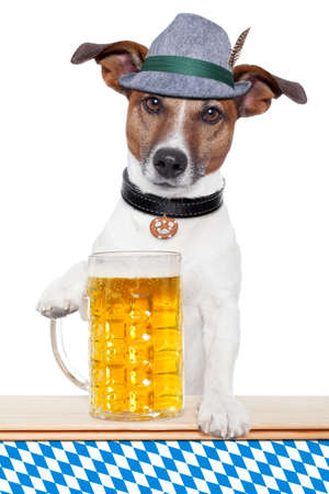 tracht: oktoberfest dog with bavarian beer mug