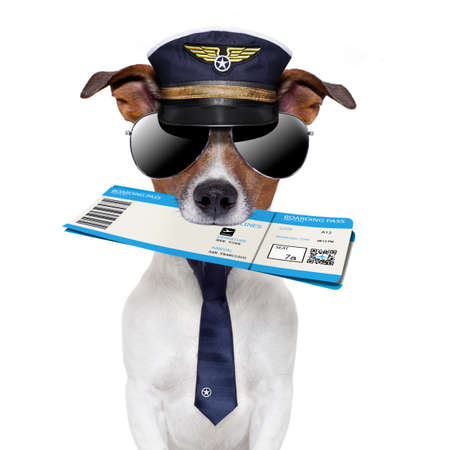 boarding pass dog  with hat and tie photo
