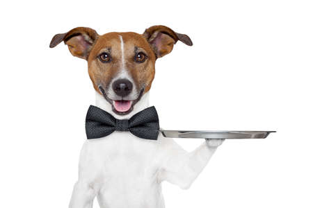 bandejas: perro celebraci�n bandeja de servicio Foto de archivo